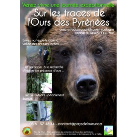 Journée exceptionnelle sur les traces de l'ours brun