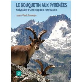 Bouquetins aux Pyrénées